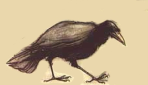 Riddle Raven Rackham