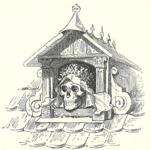 fitchers bird skull