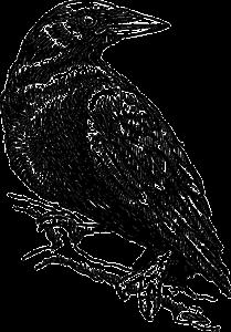 crow-48179_640