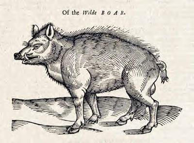 Singing bone boar