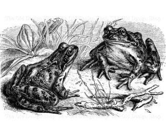 Three Languages frogs